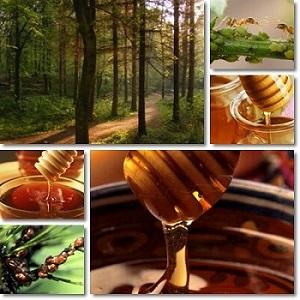Honeydew-honey