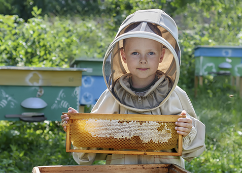 Honig Großhandel